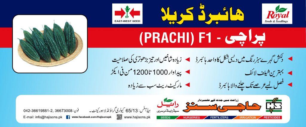 004 Prachi Flex.fh6 FNF