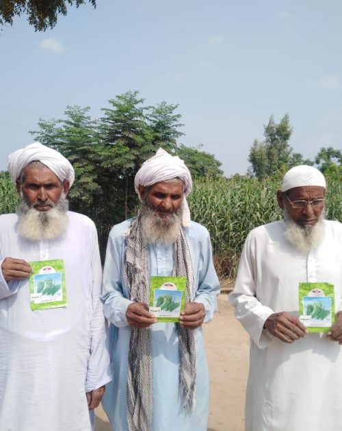 Haji M. Aslam with his brothers carrying Golden Hot seeds at Jhang, Punjab